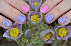 Handen med manikyr trycker på blommorna av snödroppen Royaltyfri Foto