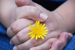 Handen met bloem Stock Afbeelding