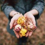 Handen met bloemen Stock Afbeelding
