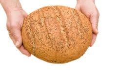 Handen met brood Stock Foto