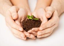 Handen met groene spruit en grond Royalty-vrije Stock Foto