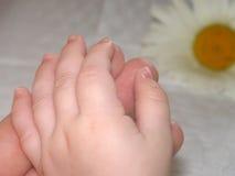 Handen met kamille Stock Foto
