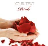 Handen met roze bloemblaadjes royalty-vrije stock afbeeldingen