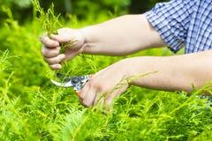 Handen met tuinmanscharen Stock Foto