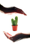 Handen om een cactus te houden Stock Fotografie