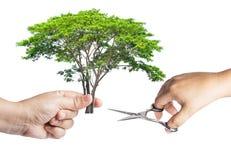 Handen rymmer ett trädsnitt med sax med den annan handen som isoleras på vit bakgrund royaltyfri bild
