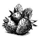 Handen skissar jordgubbar Arkivfoton