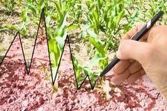 Handen skriver en graf i bakgrunden av ett kultiverat fält - begreppsbild arkivbilder