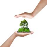 handen skyddar treen Royaltyfri Fotografi