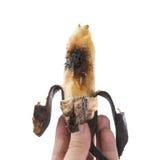 Handen som rymmer en övermogen banan med, avmaskar på vit Fotografering för Bildbyråer