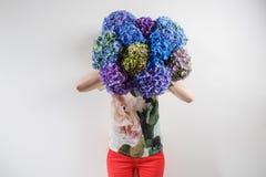 Handen som rymmer en gruppblått, färgar vanlig hortensiavitbakgrund Ljust färgar Lilamoln 50 skuggor Royaltyfri Fotografi