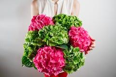 handen som rymmer en gruppgräsplan, och rosa färger färgar vanlig hortensiavitbakgrund Ljust färgar oklarhet 50 skuggor Royaltyfria Bilder