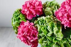 handen som rymmer en gruppgräsplan, och rosa färger färgar vanlig hortensiavitbakgrund Ljust färgar oklarhet 50 skuggor Royaltyfri Foto