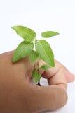 handen sparar treevärlden Arkivbild