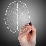 Handen tecknar hjärntecknet Arkivfoto