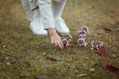 Handen väljer upp från jordfilialen av att blomstra persikaträdet arkivfoton