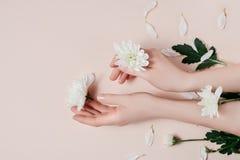 Handen van de creatieve beeld mooie plaatsen de verzorgde vrouw met witte bloemen met exemplaar op roze achtergrond in minimalist royalty-vrije stock afbeelding