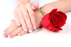 Handen van de vrouw met rood namen toe Stock Afbeelding
