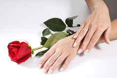 Handen van de vrouw met rood namen toe Stock Foto's