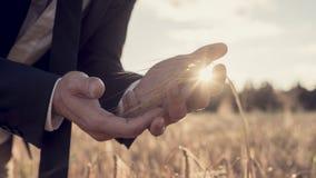 Handen van een mens op een tarwegebied met zonnestraal stock foto