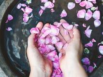 Handen van een vrouw, bloemblaadjes van rozen royalty-vrije stock foto's