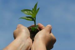 Handen van het leven Stock Foto
