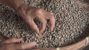 Handen van het oude vrouw sorteren door arabica koffiebonen, kwaliteitscontrole en selectie op de fabriek van de koffieaanplantin stock videobeelden