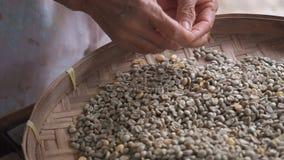 Handen van het oude vrouw sorteren door arabica koffiebonen in ronde rieten dorsende mand of bamboezeef, kwaliteit stock video