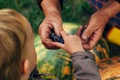 Handen van kind nemen vruchten van de handen van oude vrouwen - pompoenachtergrond stock afbeeldingen