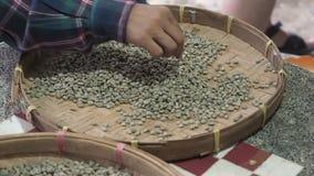 Handen van mensen die door arabica koffiebonen sorteren in ronde rieten dorsende mand of bamboezeef, kwaliteitscontrole stock footage