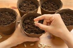 Handen van tuinman die zaden in de turfpot planten royalty-vrije stock afbeeldingen
