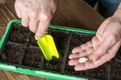 Handen van tuinman, het zaaien installaties in een pot Stock Foto's