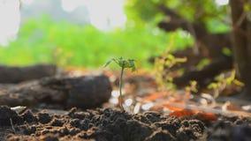 Handen van vrouw die de zaden op aardegrond planten en water gegeven met aard omringend geluid stock footage