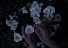 Handen van vrouw in het bos met witte paddestoelen op de grondstomp stock foto