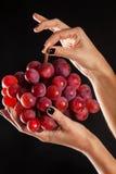 Handenholdings een bos van rode druiven in studio met zwarte backgr Royalty-vrije Stock Fotografie