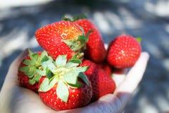 Handenhoogtepunt van sappige aardbeien stock foto's