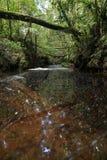 Handfat för Giluk vattenfallmaliu arkivbilder