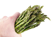 Handful of Asparagus. Man holds a bunch of this spring vegetable in his hand isolated on white Royalty Free Stock Photo