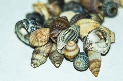 A handful of beautiful seashells gathered on the sandy beach stock photo