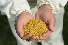 Handful of bee pollen. vitamins and minerals. royalty free stock image