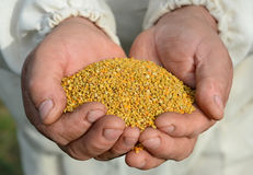 Handful of bee pollen. vitamins and minerals. Stock Image