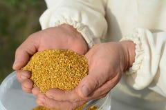 Handful of bee pollen. vitamins and minerals. Healthcare stock image
