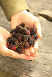 Handful of Berries Royalty Free Stock Images