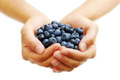 Handful of Blueberries. A person holding out a handful of freshly picked ripe blueberries royalty free stock photos
