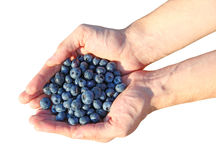 Handful of blueberries Royalty Free Stock Image
