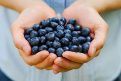 Handful of Blueberries. A handful of fresh ripe organic blueberries stock photography
