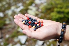 Handful of blueberries against mountains in summer Stock Photography