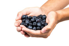 Handful of blueberries Royalty Free Stock Photo