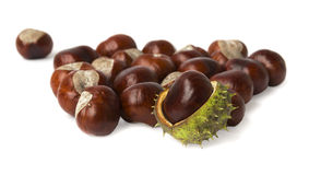 Handful of Buckeyes on white Royalty Free Stock Photography