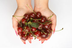 Handful of cherries stock photography